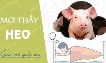 Giải mã ý nghĩa giấc mơ nằm mơ thấy lợn đánh con gì