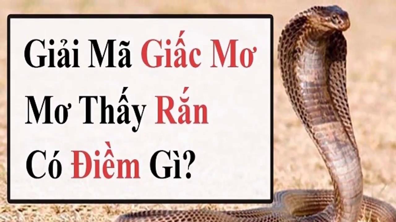 Con rắn là số mấy trong lô đề? Mơ thấy rắn đánh con gì?