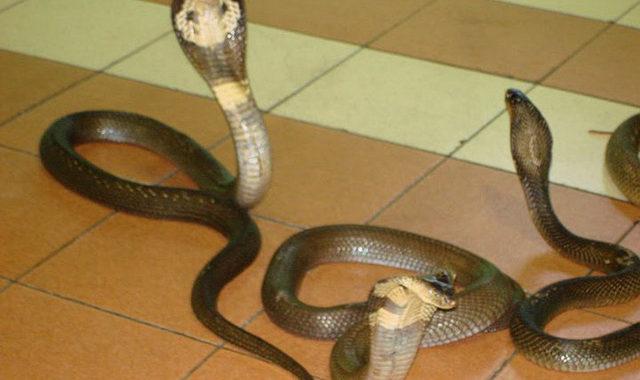 Gặp rắn trên đường hoặc vô tình nhìn thấy rắn đánh đề số nào?