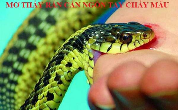 Ý nghĩa mơ rắn cắn đánh con gì? Giấc mơ thấy rắn cắn