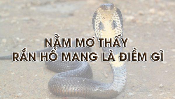 Ngủ mơ thấy rắn hổ mang là điềm gì? Giải mã giấc mơ thấy rắn