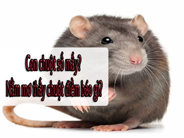 Con chuột số mấy? Nằm mơ thấy chuột là điềm báo lành hay dữCon chuột số mấy? Nằm mơ thấy chuột là điềm báo lành hay dữ