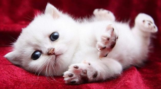 Mơ thấy mèo con