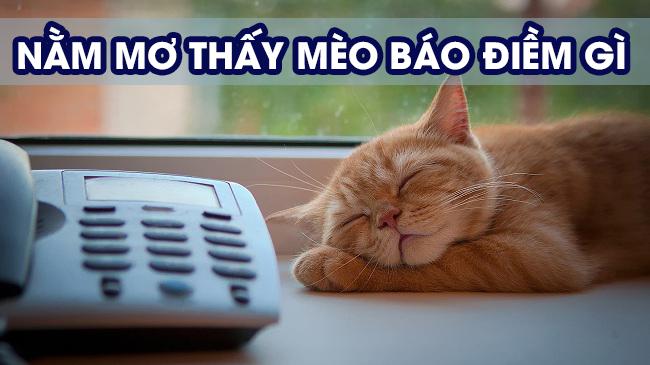 16 ý nghĩa giấc mơ thấy mèo và nằm mơ thấy mèo đánh số mấy