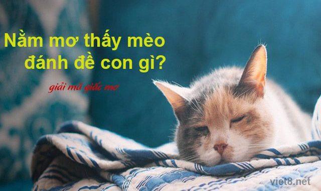 Nằm mơ thấy mèo nên đánh con gì chắc ăn nhất