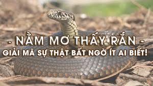 Thường xuyên nằm mơ thấy rắn là điềm báo gì? Mơ thấy rắn đánh số mấy