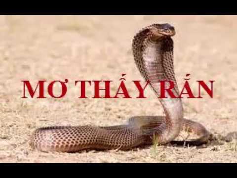 Nằm mơ thấy rắn bị chặt đầu đánh con gì chắc ăn