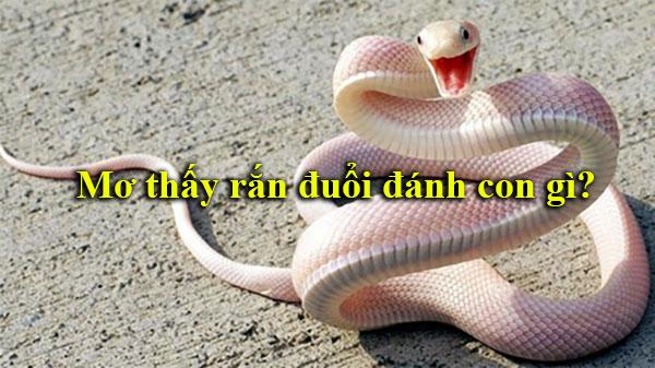 Mơ thấy rắn đuổi là số mấy – Giải mã giấc mơ rắn đuổi