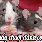 Mơ thấy chuột đẻ mang điềm báo gì? Giải mã giấc mơ thấy chuột