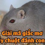 Nằm ngủ mơ thấy chuột cắn, chuột vào nhà đánh số mấy