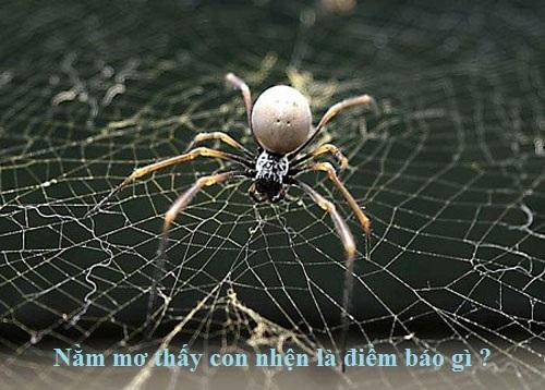 Ngủ mơ thấy nhện là số mấy? Điềm báo mơ thấy nhện và những điều đáng ngờ