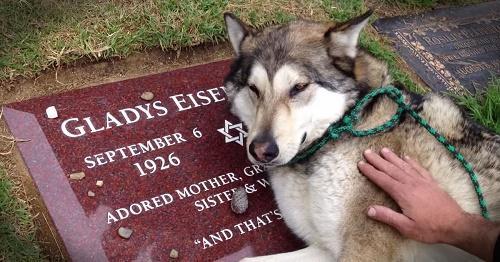 Mơ chó bị chết là điềm báo gì? Giải mã giấc mơ thấy chó chết
