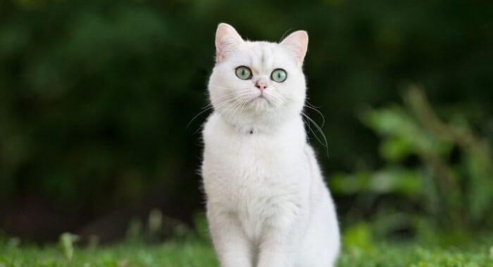 Ngủ mơ thấy mèo trắng là điềm báo gì? Mơ mèo trắng đánh con gì may mắn