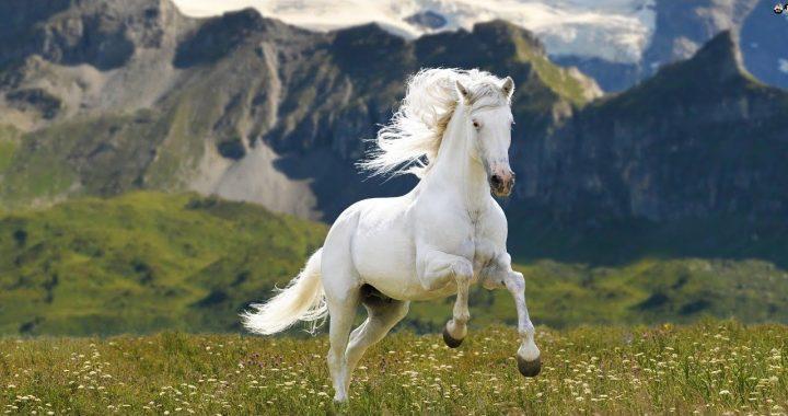 Mơ thấy cưỡi ngựa trắng là phúc hay họa? Giải mã giấc mơ cưỡi ngựa trắng