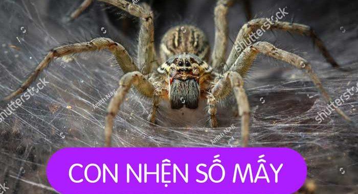 Nằm mơ thấy nhện đen là điềm báo gì? Mơ thấy nhện đen đánh con gì?