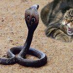 Mơ thấy mèo đánh nhau với rắn là điềm báo gì? Con mèo số mấy?