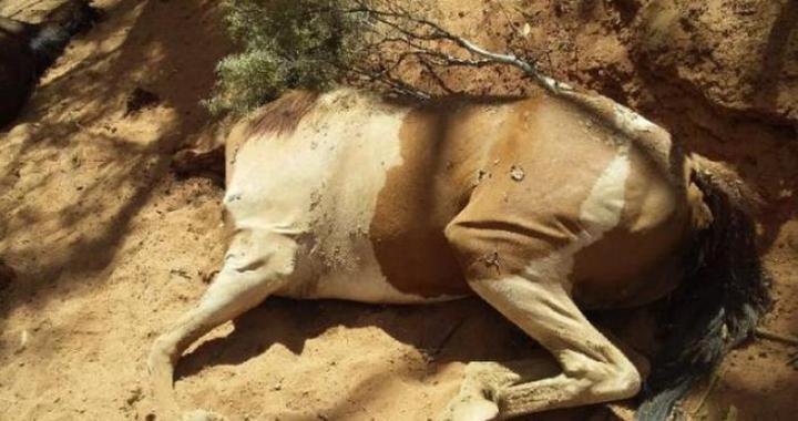Mơ thấy ngựa chết là điềm báo gì? Làm gì để giải xui khi mơ thấy ngựa chết