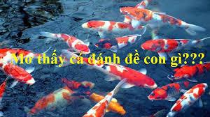 Mơ thấy kéo lưới bắt cá là số mấy? Giải mã giấc mơ thấy kéo lưới bắt cá