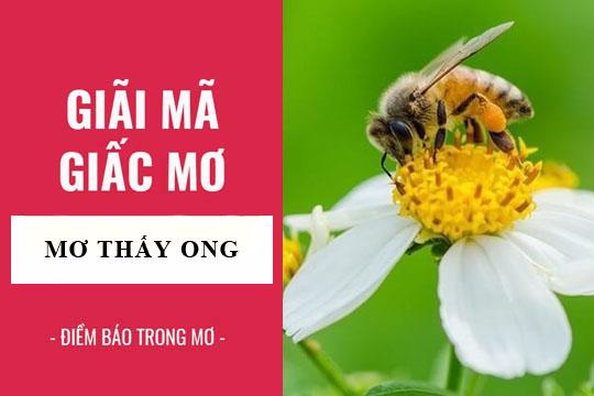 Mơ thấy ong số mấy? Giải mã giấc mơ thấy ong đánh con gì?