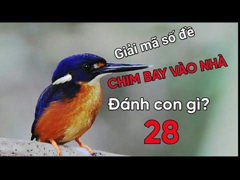 Mơ thấy chim bay vào nhà điềm gì? Chim bay vào nhà đánh con gì? số mấy?