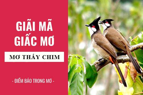 Mơ thấy chim là điềm gì? Mơ thấy chim số mấy? đánh con gì?