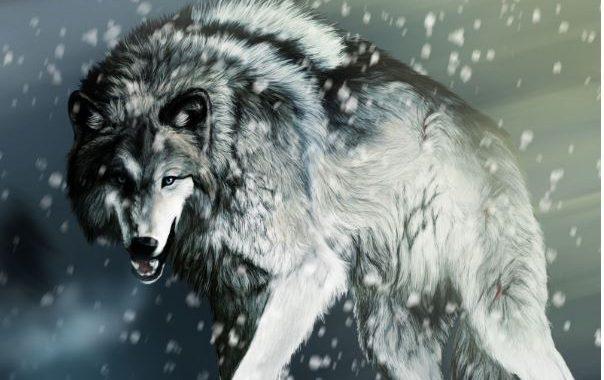 Mơ thấy chó sói là điềm báo gì? Mơ thấy chó sói đánh con gì? số mấy?