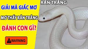 Mơ thấy rắn trắng số mấy? Nằm mơ thấy rắn trắng là điềm gì?