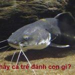 Mơ thấy cá trê là điềm gì? Nằm mơ thấy cá trê đánh con gì? số mấy?