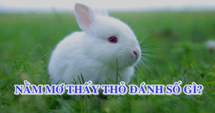 Mơ thấy con thỏ là điềm lành hay dữ? Mơ thấy thỏ số mấy? đánh con gì?