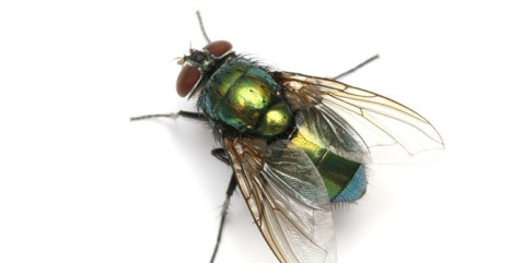 Mơ thấy con ruồi là điềm lành hay dữ? Ngủ mơ thấy ruồi số mấy? đánh con gì?