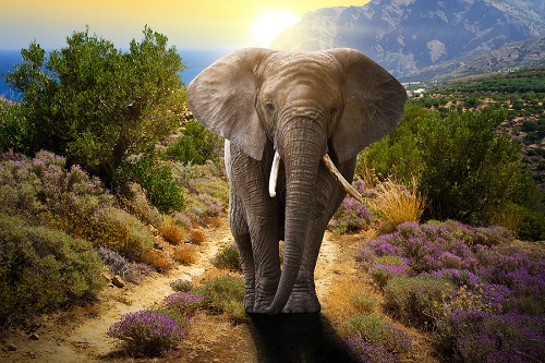 Mơ thấy con voi số mấy? đánh con gì? Mơ thấy voi có ý nghĩa điềm báo gì?
