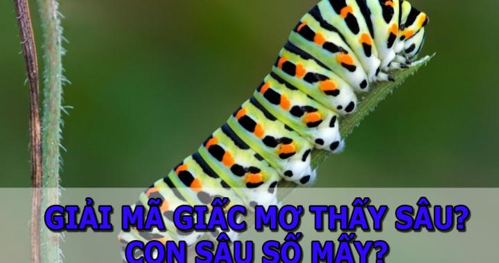 Mơ thấy sâu bọ là điềm báo gì? Nằm mơ thấy sâu bọ đánh con gì? số mấy?