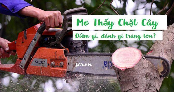 Mơ thấy chặt cây là điềm báo gì? Nằm mơ thấy chặt cây đánh con gì? số mấy?