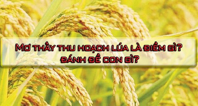 Mơ thấy thu hoạch lúa là điềm gì?