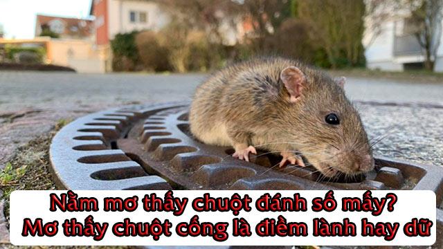 Nằm mơ thấy chuột đánh số mấy? Mơ thấy chuột cống là điềm lành hay dữ
