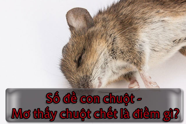 Số đề con chuột - Mơ thấy chuột chết là điềm gì?