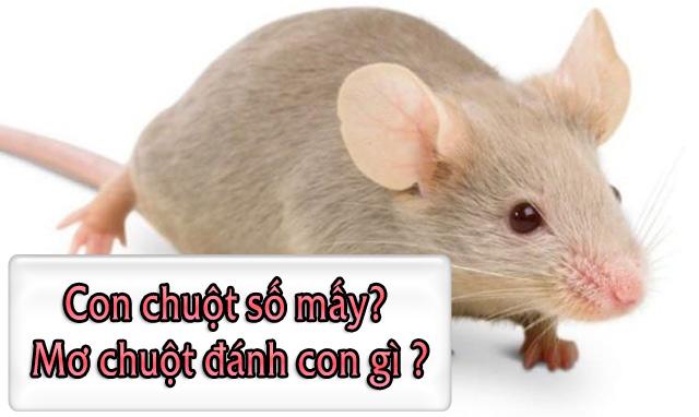 Con chuột số mấy? Mơ chuột đánh con gì