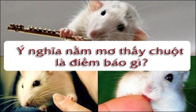 Ý nghĩa nằm mơ thấy chuột là điềm báo gì?