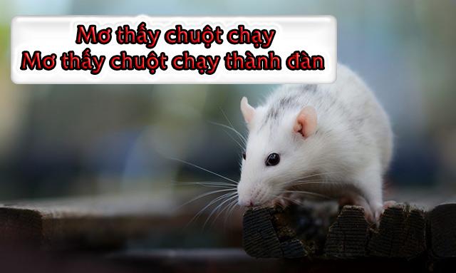 Mơ thấy chuột chạy - Mơ thấy chuột chạy thành đàn