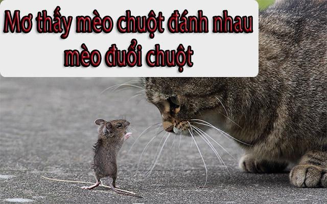 Mơ thấy mèo chuột đánh nhau, mèo đuổi chuột