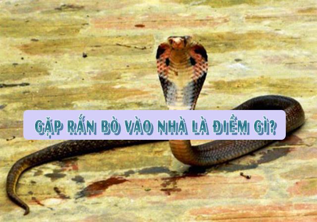 Gặp rắn bò vào nhà là điềm gì?