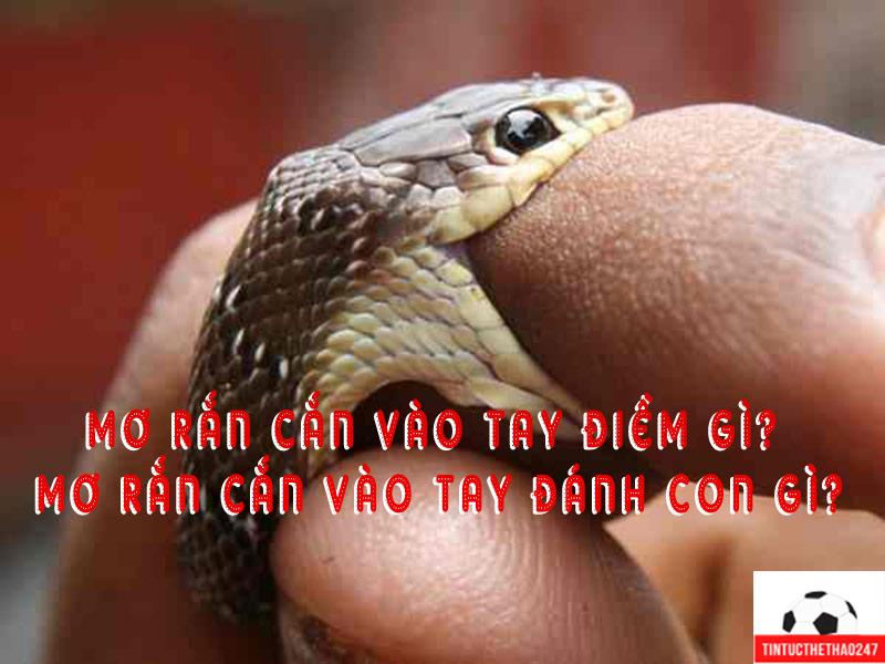 Mơ rắn cắn vào tay điềm lành hay dữ ? Mơ rắn cắn vào tay đánh con gì?