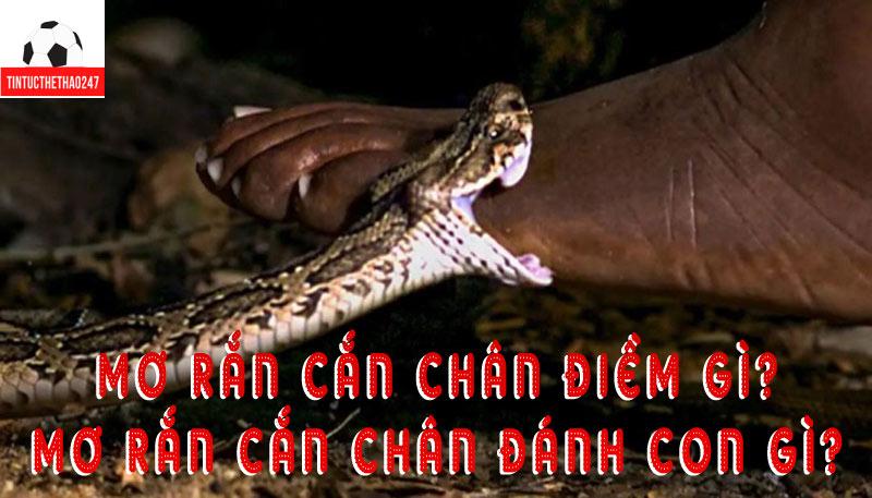 Mơ bị rắn cắn vào chân - Nằm mơ thấy rắn cắn chảy máu