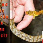 Cảnh báo: mơ bị rắn cắn|Giải mã nằm mơ rắn cắn đánh con gì?