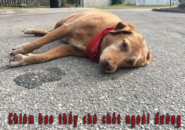 Chiêm bao thấy chó chết ngoài đường