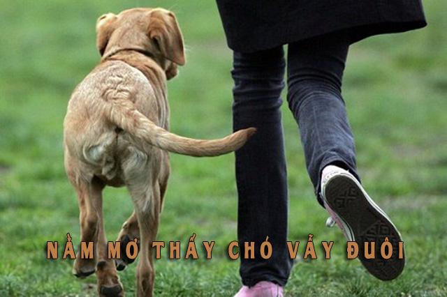Nằm mơ thấy chó vẫy đuôi