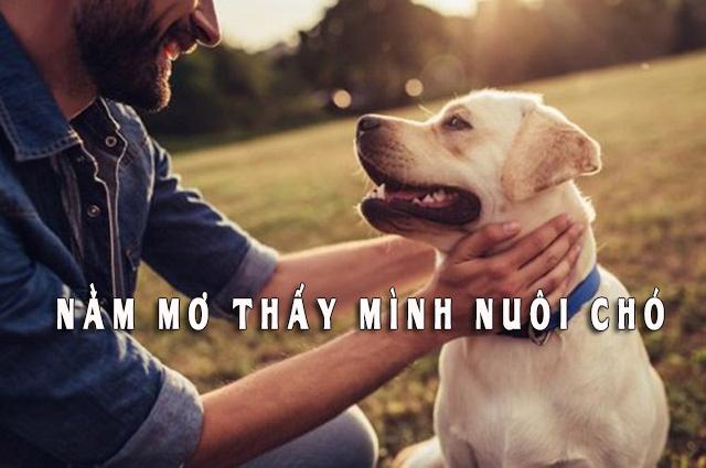 Nằm mơ thấy mình nuôi chó có phải là điềm tốt? Mơ thấy chó đánh số mấy?