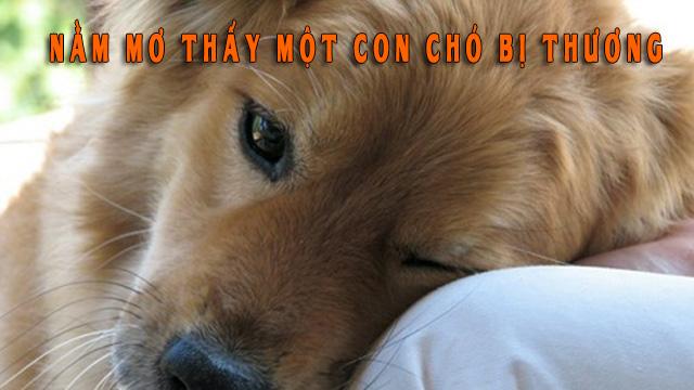 Nằm mơ thấy một con chó bị thương