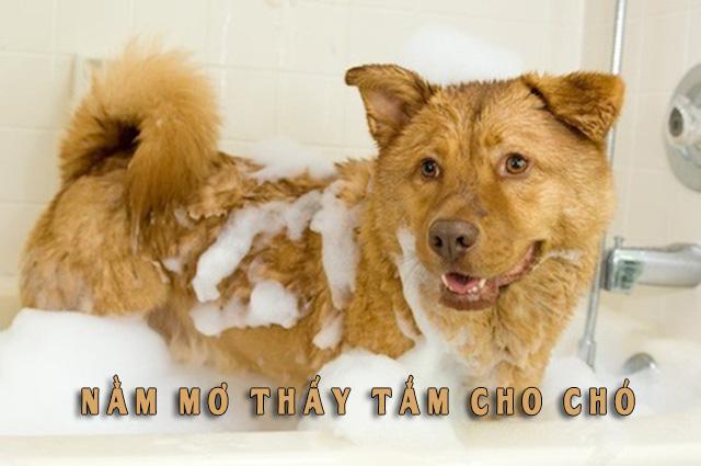 Nằm mơ thấy tắm cho chó là điềm gì?
